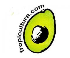 TROPICULTURA | Fruta tropical ecológica