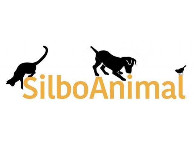 Tienda online de productos para mascotas | SilboAnimal